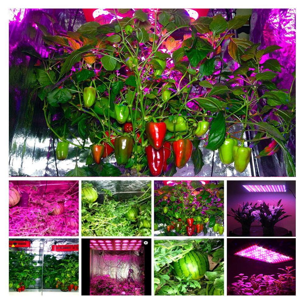 House Plant Grow Light: 800W COB Full Spectrum Indoor LED Grow Light For Indoor